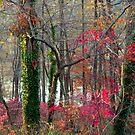 Red remnants, Greenbelt Lake by nealbarnett