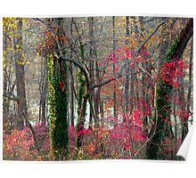 Red remnants, Greenbelt Lake Poster