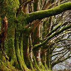 Meldon, Dartmoor, Devon by Squealia