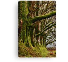 Meldon, Dartmoor, Devon Canvas Print