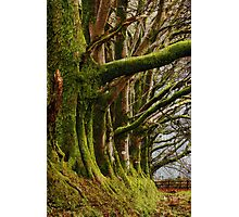 Meldon, Dartmoor, Devon Photographic Print