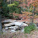 Mountain stream in fall, North Carolina by nealbarnett