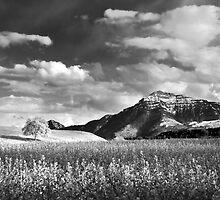 Swiss Landscape by Mario Curcio