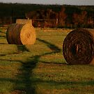 Hay! by Nathaniel Arnold