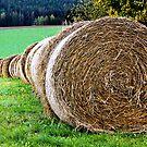 In the Hay by JulieDanielle