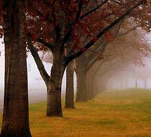 Autumn Fog by atoth