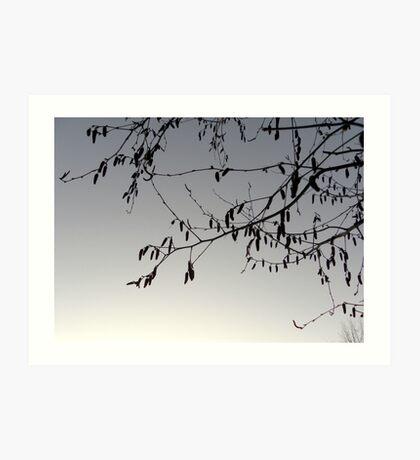 Bare Branches. Art Print