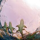 Undersea Discoveries; Sharks, Rays and Chimeras  by Greg Amptman
