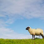 single sheep by derausdo