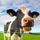 Cow portrait by derausdo