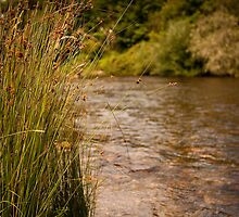 Jamieson - Goulburn River by Ashpix