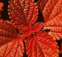 Acid Leaf by DanAlford