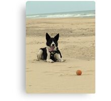 Baxter and the Ball Canvas Print