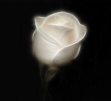 Winter White by Sandy Keeton