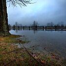 Wet Today, Sunny Tomorrow by Daniel Wills