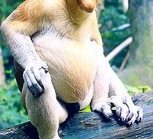 Proboscis Monkey by mosej