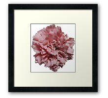 Single Pink Carnation - Hipster/Pretty/Trendy Flowers Framed Print
