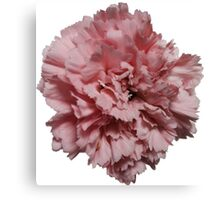 Single Pink Carnation - Hipster/Pretty/Trendy Flowers Canvas Print