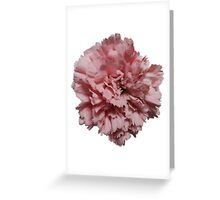 Single Pink Carnation Greeting Card