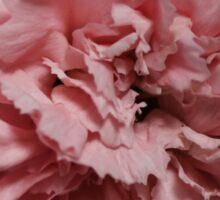 Single Pink Carnation - Hipster/Pretty/Trendy Flowers Sticker