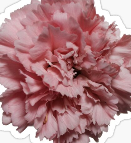 Single Pink Carnation - Hipster/Pretty/Trendy Flowers Sticker