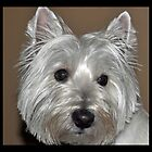 Westie  by stampmouse