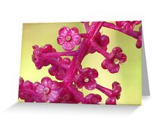 Poke Flower Greeting Card