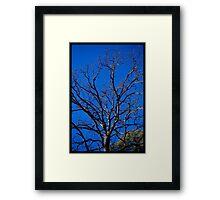 Untitled.00259 Framed Print