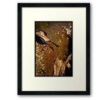 Untitled.00262 Framed Print