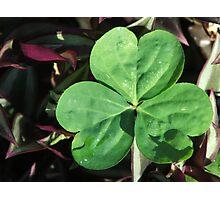 The Luck Of The Irish Photographic Print