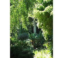 Botanic Gardens 1 Photographic Print