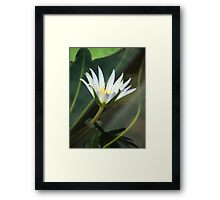Sheer Perfection Framed Print