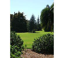 Botanic Gardens 2 Photographic Print