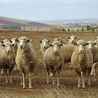 What are ewe&#x27;s looking at? by Kerry  Hill