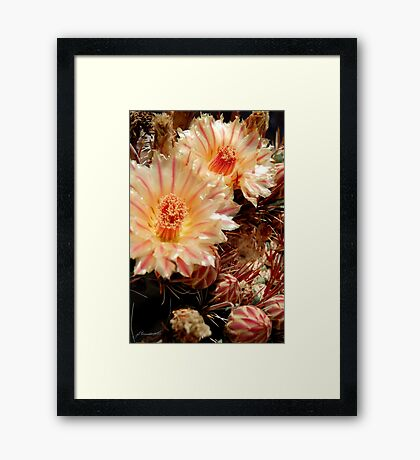 Candy Stripes Framed Print