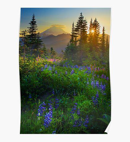 Mount Rainier Sunburst Poster