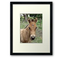 Meet Tex's Look-a-Like Brother Framed Print