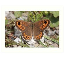 Large Wall Brown butterfly Art Print