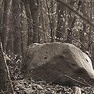 stone by Heike Nagel