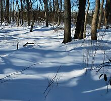 texture and tone winter scape  by Jeff Stroud