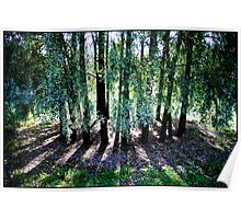 Trees shadow geometry Poster