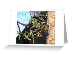 Chestnut tree in spring Greeting Card