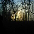 """Mystical Forest"" by TabiButterfli"