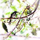 New Holland Honeyeater by Manfred Belau