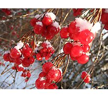 Berry Happy Morning Photographic Print