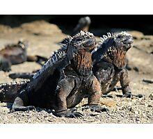 Iguanna - Galapagos Photographic Print