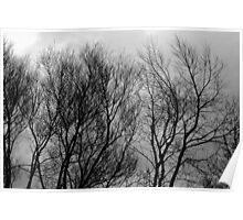 Winter Tree's & Winter Sky Poster