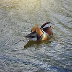 Mandarin Duck at Lagos Zoo, Portugal by Erika Ribeiro