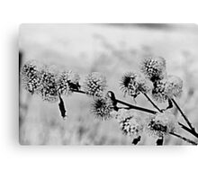 Black and White Burrs Canvas Print