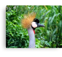 Crested Crane - South Africa Canvas Print